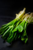 Young wild garlic Stock Images