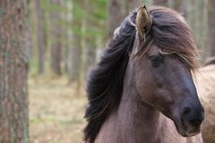 Young wild horse with its mane blowing in the wind stock image
