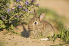 Young wild rabbit Stock Photo
