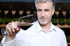 Young wine Man admires the color of wine in a glass. Royalty Free Stock Image