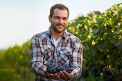 Young winemaker in vineyard Stock Photos