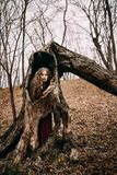 Young witch in the autumn forest Royalty Free Stock Photography