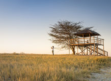 Young Woman on African Safari. A young woman stands in long grass and takes photos of sunset while on safari in the Makgadikgadi Pans, Botswana, Africa Royalty Free Stock Photos