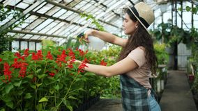 Young woman in apron and hat spraying water on plants in greenhouse. Young woman in apron and hat is spraying water on plants in greenhouse using spray bottle stock footage
