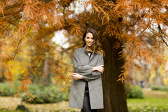 Young woman in the autumn park. Pertty young woman in the autumn park Royalty Free Stock Images