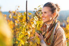 Young woman in autumn vineyard Royalty Free Stock Photos