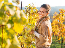 Young woman in autumn vineyard Royalty Free Stock Photo