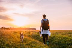 Young Woman Backpacker Walking With Dog In Summer Meadow Grass D. Uring Sunset Sunrise Time. Healthy Lifestyle Walks In Evening Summer Sunlight royalty free stock image