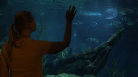 Young woman in Bangkok, Thailand at the oceanarium of Siam Ocean World watching on fish. Young woman in Bangkok, Thailand at the oceanarium of Siam Ocean World stock video footage