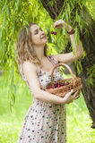 Young woman with a basket of cherries. In the garden Royalty Free Stock Photography