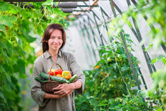 Young woman with basket of greenery and vegetables in the greenhouse. Time to harvest. royalty free stock photography