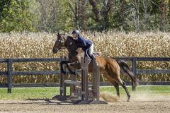 Young woman and bay gelding over jump. Young woman and a bay gelding over an oxer jump Royalty Free Stock Photo