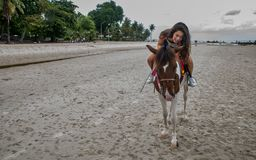 Young woman on beach hugging horse royalty free stock image