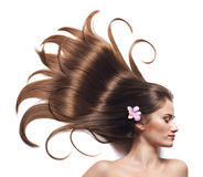 Woman with beautiful brown hair royalty free stock photo