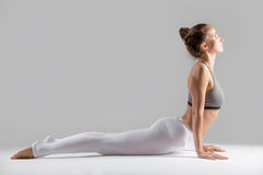 Young woman in Bhujangasana pose, grey studio background Royalty Free Stock Images