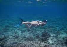 Young woman in bikini with fins doing snorkeling in tropical sea royalty free stock images