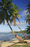 Young woman in bikini laying on leaning palm tree, Las Galeras b Royalty Free Stock Photography