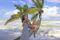 Young woman in bikini sitting on palm trees Stock Photo