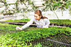 Young woman biologist. With sprout in greenhouse Stock Images