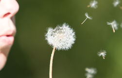 Young woman blowing to the dandelion, selective focus Royalty Free Stock Photography