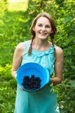 Young woman in blue dress picking blackberries Stock Photography