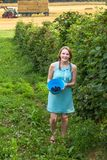 Young woman in blue dress picking blackberries Royalty Free Stock Images