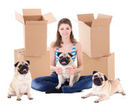 Young woman with brown cardboard boxes and cute pug dogs isolate stock photography