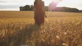 Young woman with brown hair walking through golden wheat field with balloons in hand. Beautiful girl in red dress going. Among barley plantation with sunlight stock footage