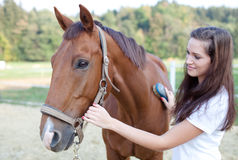 Young woman brushing a beautiful horse Stock Images