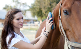 Young woman brushing a beautiful horse Royalty Free Stock Photography