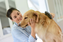 Young woman brushing dog's hair Stock Images