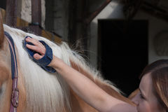 Young woman brushing her horse, stallion of horse breed Haflinger