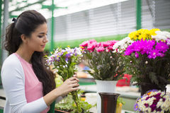 Young woman buying flowers Royalty Free Stock Image