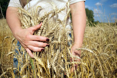 Young woman caddle ripe rye stems Stock Image