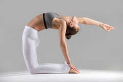 Young woman in Camel pose, grey studio background Royalty Free Stock Photography