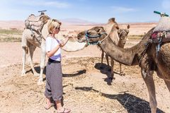 Young woman with a camels in Morocco. stock photo