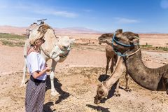 Young woman with a camels in Morocco. stock image