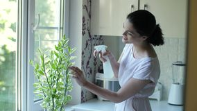 Young woman caring for houseplant. Woman care houseplant growth. Watering small tree stock video