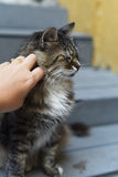 Young woman with cat outdoors Royalty Free Stock Images