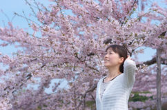 Young woman and cherry blossom Stock Photos