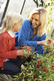 Young woman with child harvesting tomatoes. Looking at each other Royalty Free Stock Photo