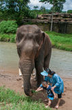 Young woman and child traveler feeds the elephant. Chiangmai, Thailand - July 22, 2014:young woman and child traveler feeds the elephant in the elephant Elephant stock images