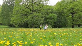 A young woman with a child is walking around the field with dandelions. stock footage