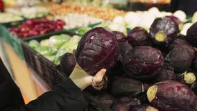 Young woman chooses red cabbage on store shelves. Сloseup of hands of an attractive young woman with a vegetable in it. Young woman chooses red cabbage on stock footage