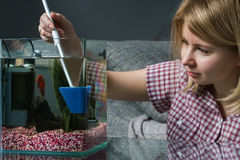 Young woman cleaning aquarium with beta fish at home. Woman cleaning aquarium with beta fish at home Royalty Free Stock Photo