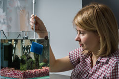 Young woman cleaning aquarium with beta fish at home. Woman cleaning aquarium with beta fish at home Stock Photos