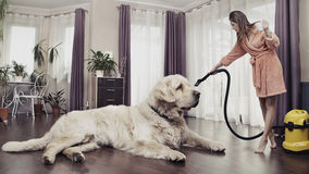 Young woman cleaning big dog Stock Photo