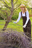 Young woman cleaning tree limbs. Apple tree orchard Stock Photography