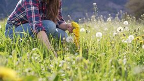 Young woman collect field flowers and weave dandelion wreath. Close up. 4k stock video