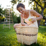 Young woman collecting apples in an orchard Stock Photography